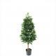 Vaso di alloro altezza 120cm, verde